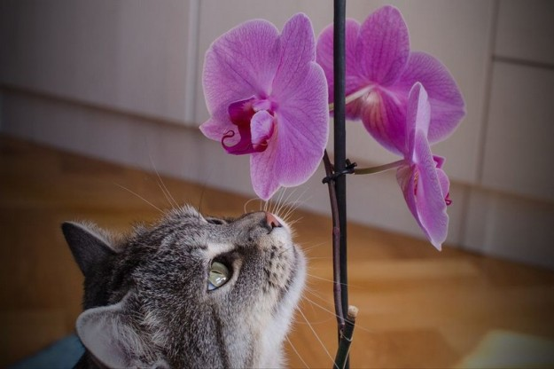 animals-smelling-flowers-13