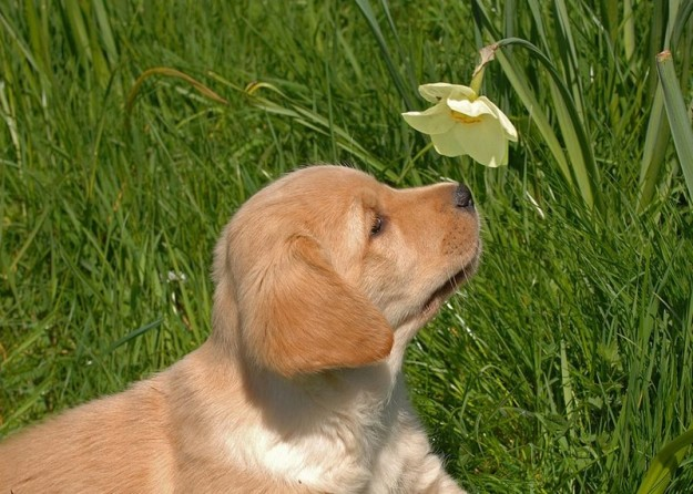 animals-smelling-flowers-14