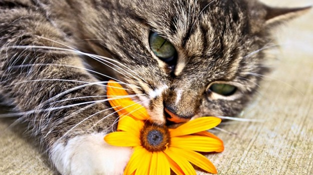 animals-smelling-flowers-15