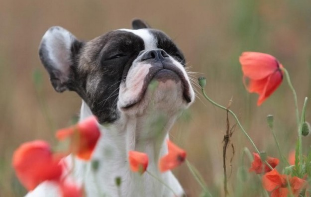 animals-smelling-flowers-16