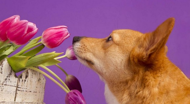 animals-smelling-flowers-17