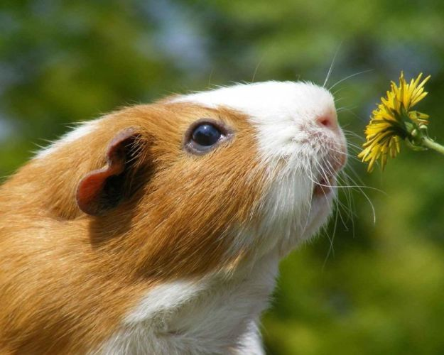animals-smelling-flowers-30